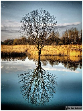tree-reflection